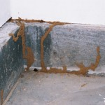 Identify Sources of Termites and Protect Your Home