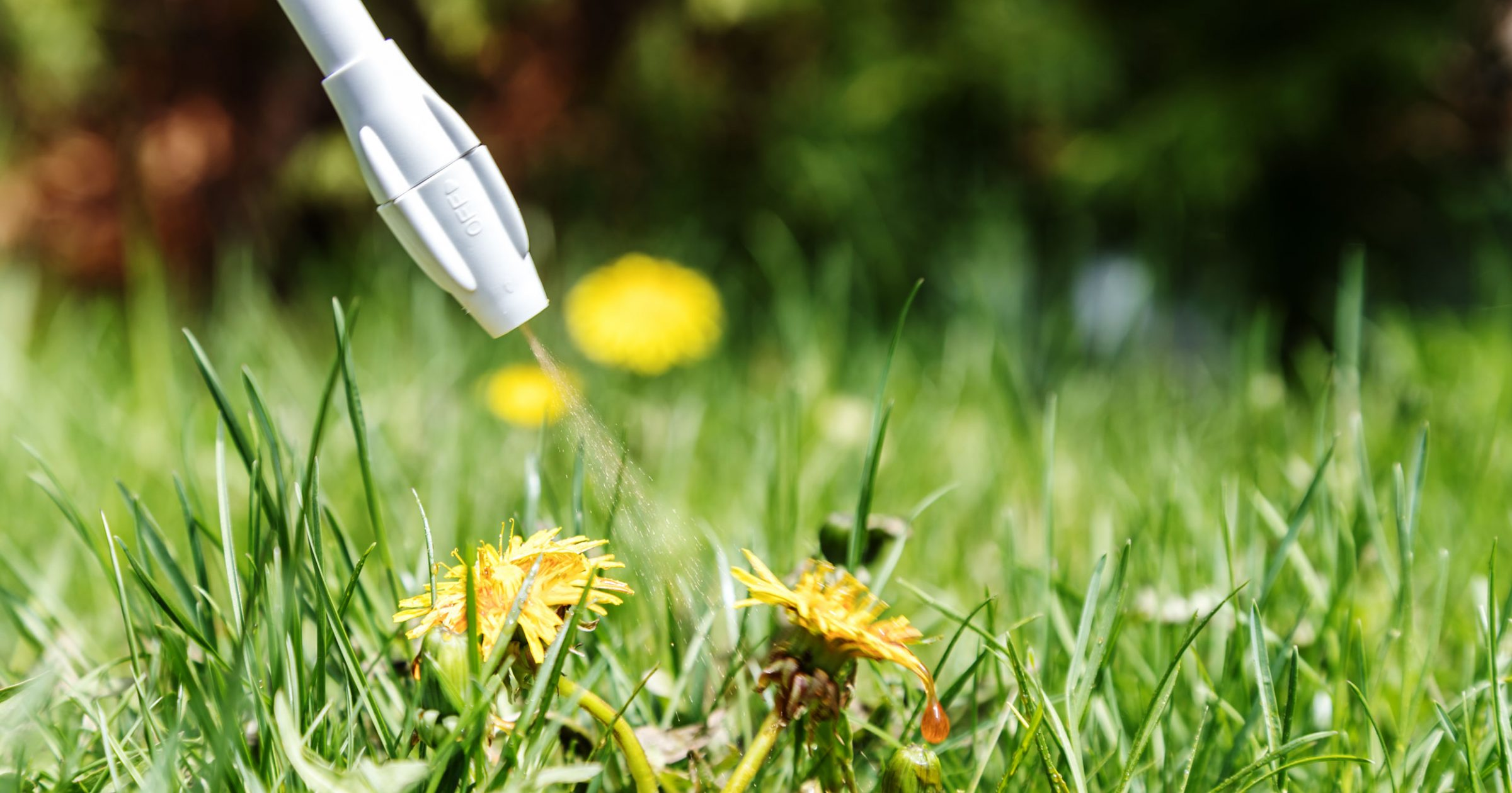The Most Common Lawn Weeds